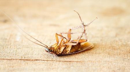 Самые эффективные средства от тараканов в квартире