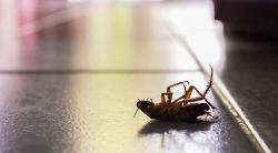 Как избавиться от тараканов в квартире: популярные методы и средства