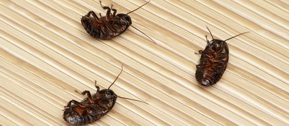 Борная кислота от тараканов: рецепт с яйцом