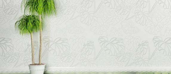Как размножить драцену в домашних условиях – советы цветоводов