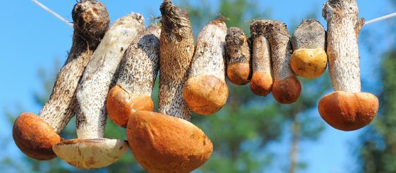 Как правильно сушить грибы в домашних условиях