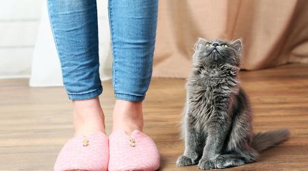 Как быстро и навсегда избавиться от запаха кошачьей мочи