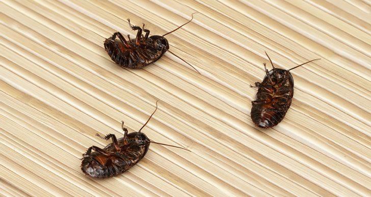 Рецепт от тараканов с борной кислотой и яйцом