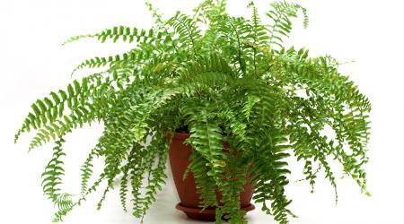 Какие тенелюбивые комнатные растения можно выращивать дома