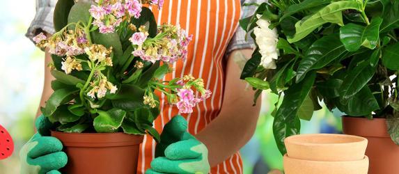 Как избавиться от мошки, поражающей комнатные цветы