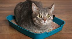 Как приучить котенка к туалету в условиях квартиры
