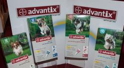 «Адвантикс» для собак: инструкция по применению, свойства, состав
