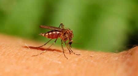 Какие народные средства помогут в борьбе с комарами