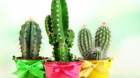 Как ухаживать за кактусами в домашних условиях: подробная инструкция от опытных цветоводов