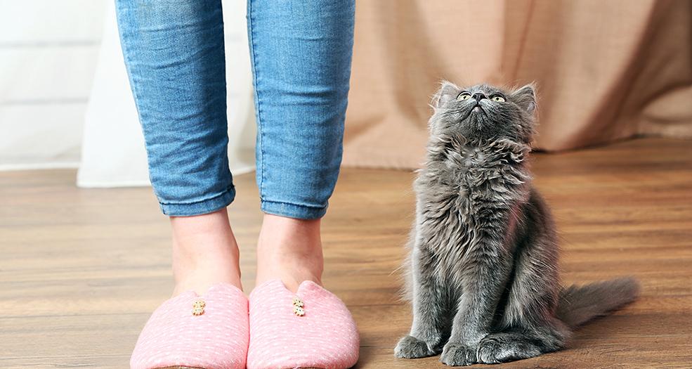 избавиться от запаха кошачьей мочи