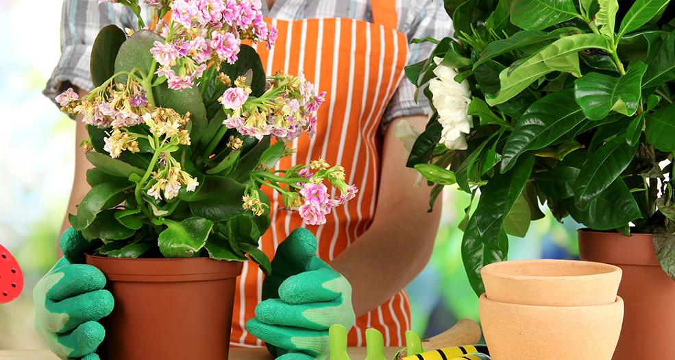 мошки в комнатных цветах как избавиться